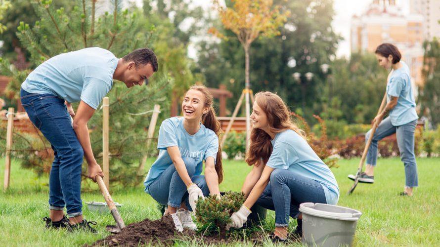 Actividad de plantación de árboles y reforestación para empresas