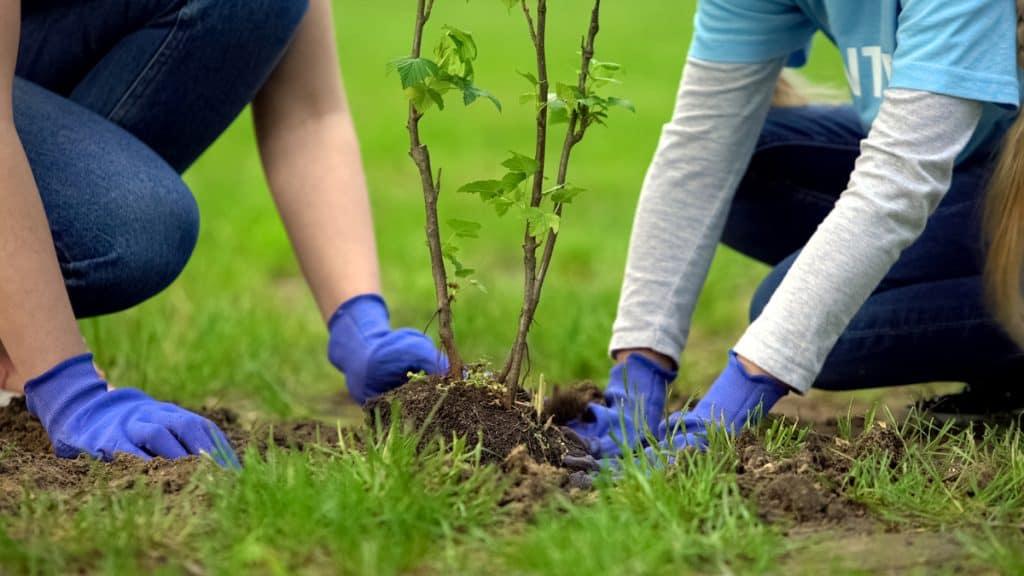 Actividad rsc plantación de arboles para empresas