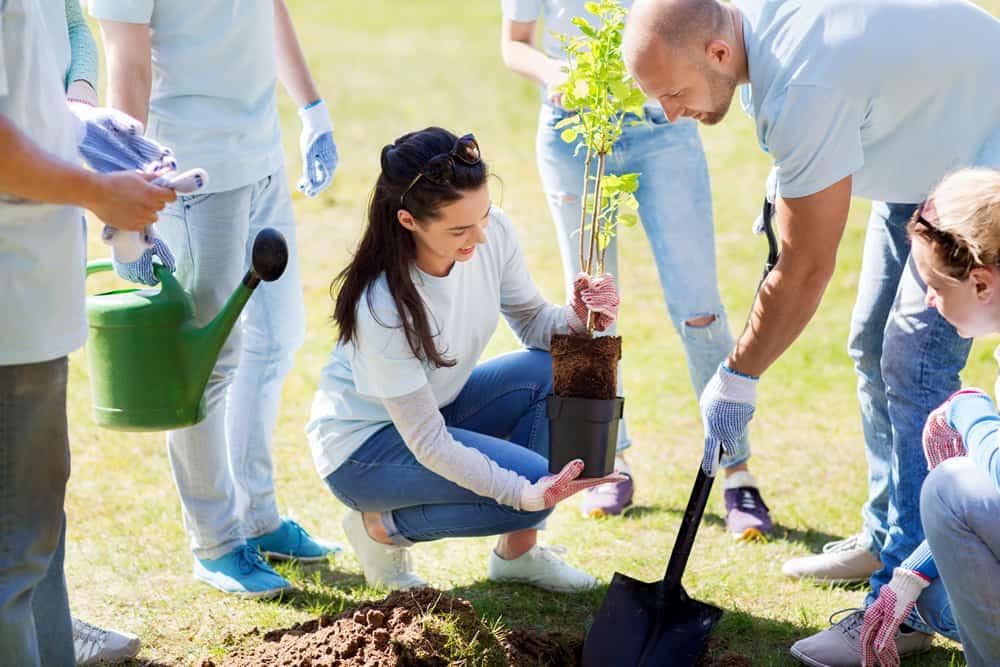 Rsc plantacion arboles para empresas